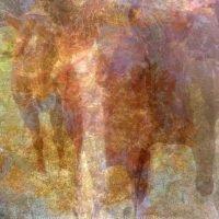 Horses (Equine Commissioned Art)