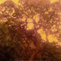 One Great Big Tree - Version 4 copy 2